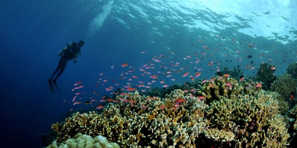 Diving Explore Laut Morotai