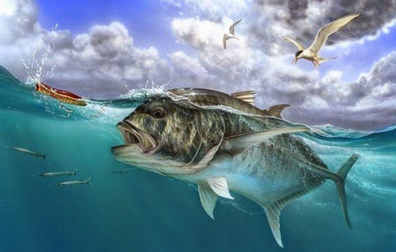 Fishing Morotai 2016 Siap 75%